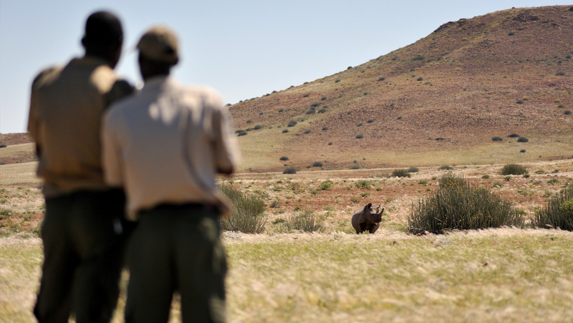 Conservancy rhino rangers at work monitoring rhino. CSN guests get to track and follow rhino with a conservancy team